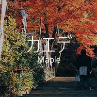 japan maple